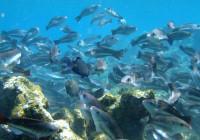 Un rapport des Nations Unies souligne les liens entre la « perte sans précédent de biodiversité » et la propagation des maladies