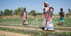 Comment relever le défi de l'eau dans l'agriculture