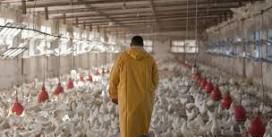 La résistance aux antimicrobiens est une réalité